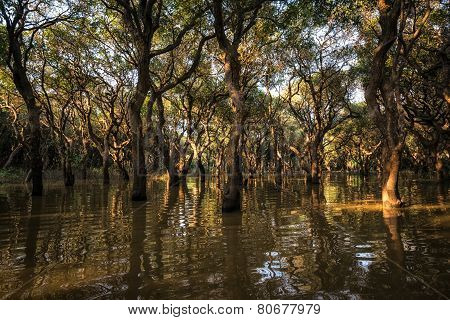 Tonle Sap Mangrove Forest