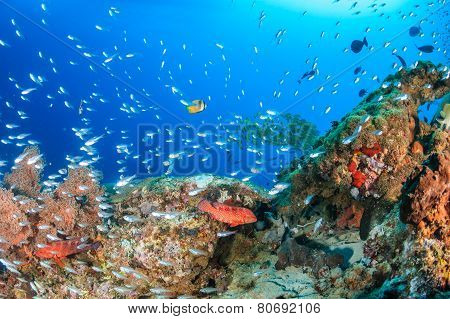 Glassfish Swarm Around A Coral Pinnacle
