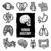 picture of internal organs  - Human anatomy internal body organs sketch decorative icons set isolated vector illustration - JPG