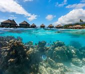image of french polynesia  - Beautiful coral garden under over the water bungalows in French Polynesia - JPG