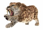 stock photo of saber tooth tiger  - 3D digital render of an aggressive smilodon or a saber toothed cat isolated on white background - JPG