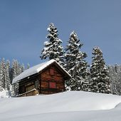 stock photo of chalet  - Little chalet and firs winter scene in Braunwald - JPG