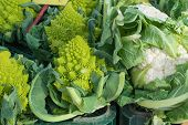 picture of romanesco  - Cauliflowers and romanesco on a street market stall - JPG