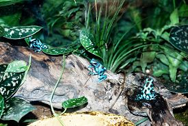 foto of baby frog  - Blue baby frogs sitting in the group on a tree trunk  - JPG