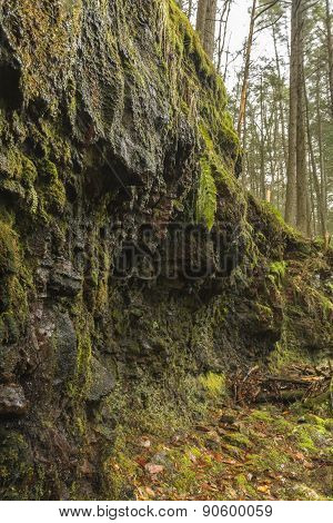 Mossy Wet Cliff