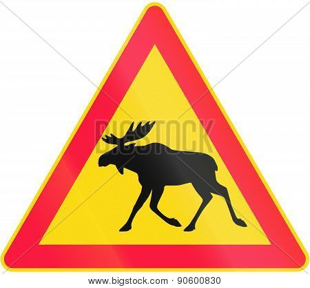 Moose Crossing In Finland