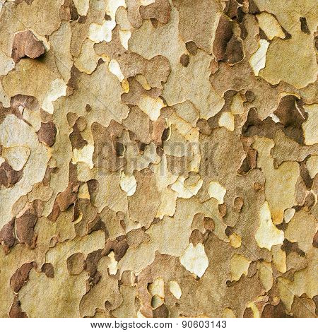 Platan bark natural pattern