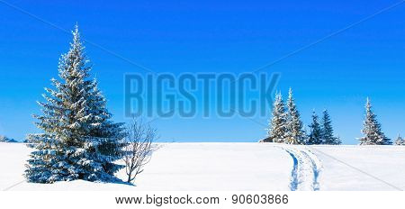 Beautiful winter landscape with snow-covered pines
