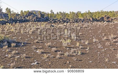 Desert Grasses On A Volcanic Landscape