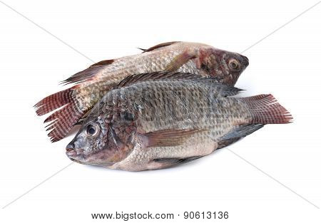Whole Round Fresh Tilapia Fish On White Background