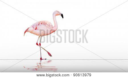 The greater flamingo (Phoenicopterus roseus) on the beach. Picture with space for your text.