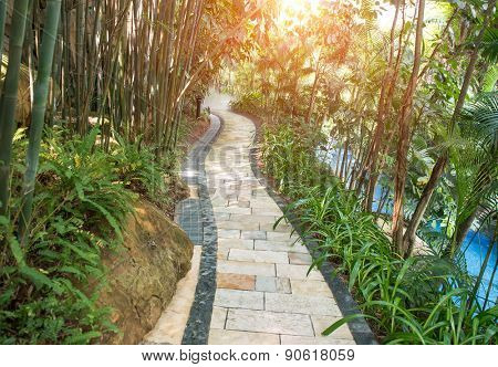walkway in a beautiful Park with many bamboo