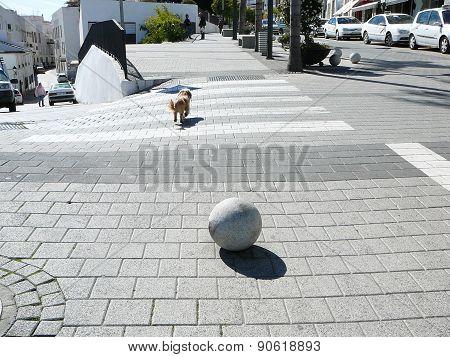 Dog On Pedestrian Crossing
