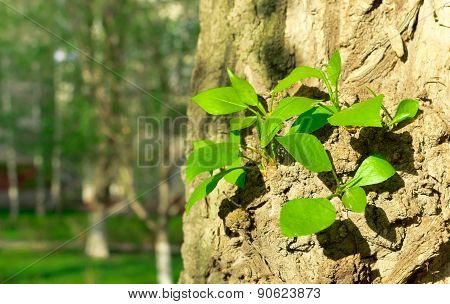 Fresh Green Summer Tree Shoots