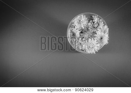 Black And White Dandelion Flowers