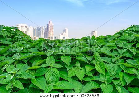 City Skyline Over Green Leaves