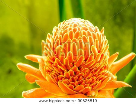 Single Orange Bloom Bloom