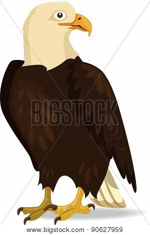 Eagle - Illustration
