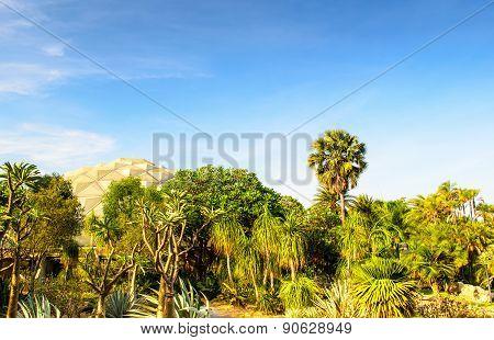 Desert Garden And Sky