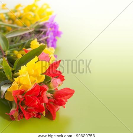 Bright,colorful wildflowers on gradient green background