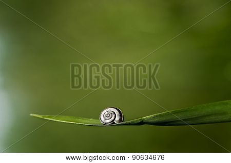 Snail Helix on Grass Green Background