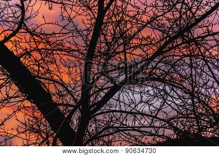 Branches Of Trees On The Backdrop Of A Winter Sky At Sunrise