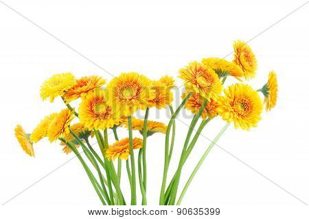 Bouquet of gerber flowers