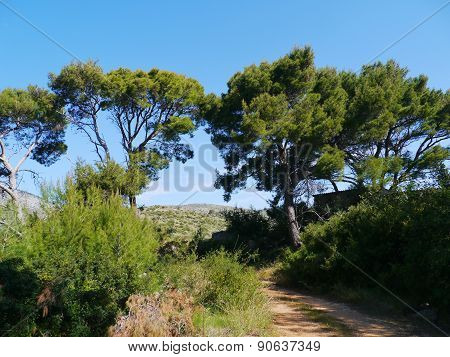 A footpath in the nature of Lastovo