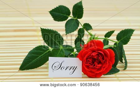 Sorry card with red wild rose