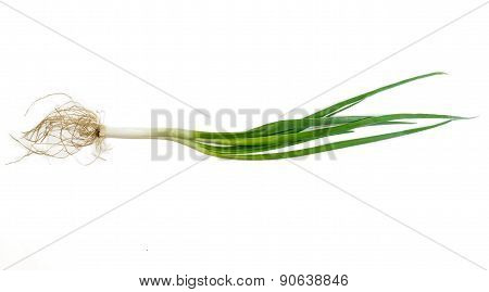 Stalk Of Green Onion