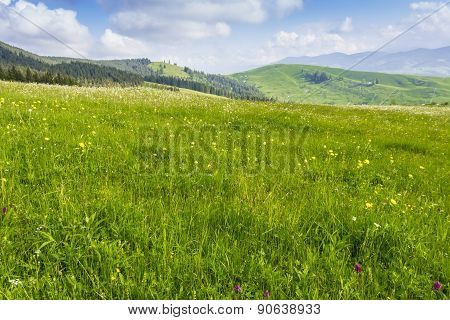 Mountain Pasture In The Morning