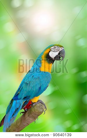 Parrot on green background
