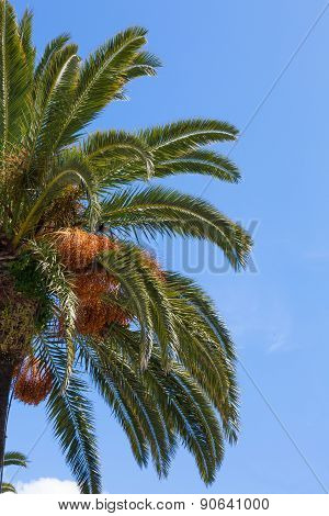Palm Tree Branches Over A Clear Blue Sky