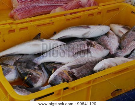 Fresh fishes in a yellow tub