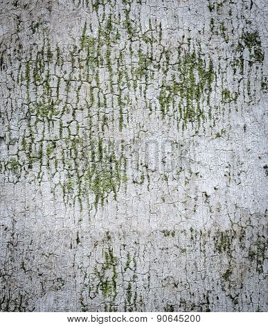 Palm Ree Bark Texture