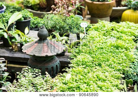 Green Plants In The Garden