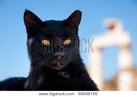 Proud Black Cat