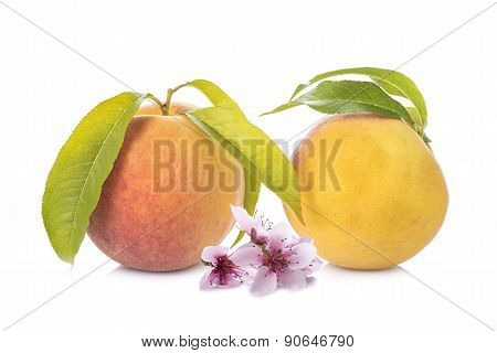 Peaches With Leaves And Flowers Isolated On White