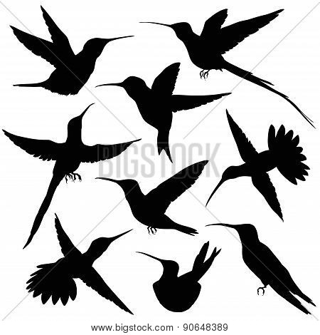 Hummingbird Silhouette. vector illustration