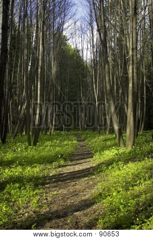 Sprind Forest