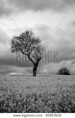 Black White Moody Atmospheric Tree In Countryside
