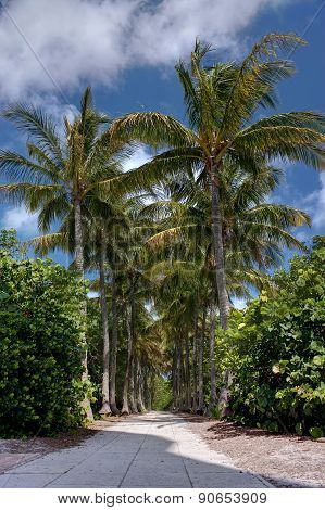 Palm Tree Lined Walkway