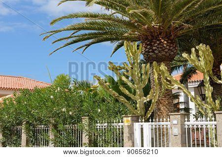Plants Behind Fence Of Metal Lattices, Puerto De Santiago, Tenerife.