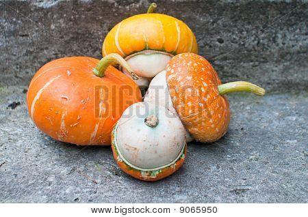 Four Decorative Pumpkins (cucurbita Pepo) On Concrete Background