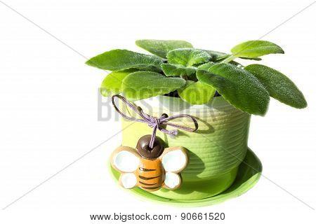 Beautiful flower on a vase