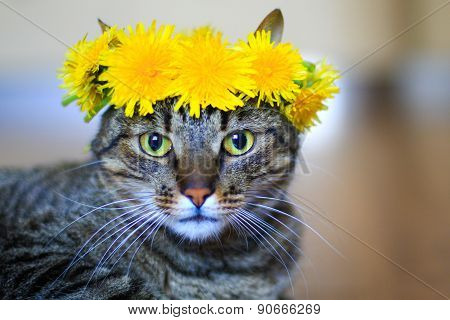 cat in flower crown