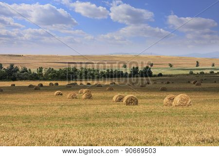 Hay Rolls Spread On Agricultural Fields