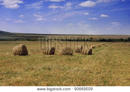 Collected Wheat On Agricultural Field