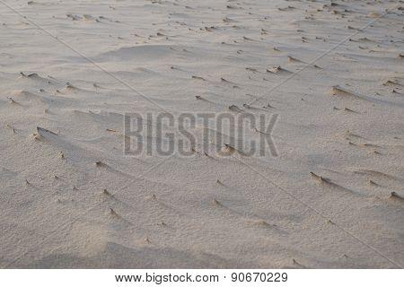 Sand Sculpture On Sand Dune