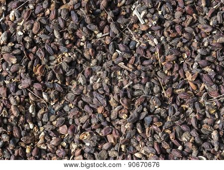 Betel Or Areca Nuts Drying On The Road Surface.